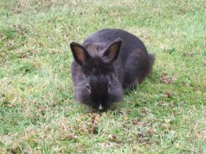 Roger Manuel Rabbit